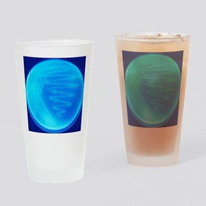 Bacterial culture Drinking Glass