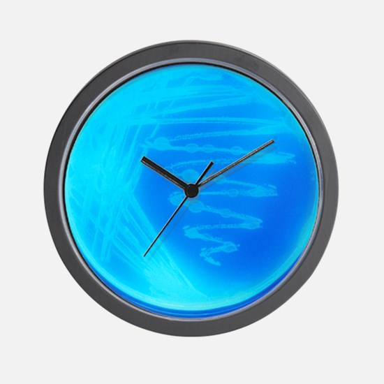 Bacterial culture Wall Clock