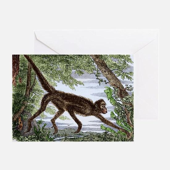 Spider monkey, historical artwork Greeting Card