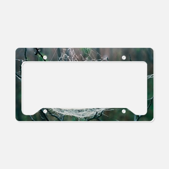 Spider web License Plate Holder