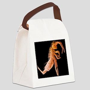 Springtail, SEM Canvas Lunch Bag