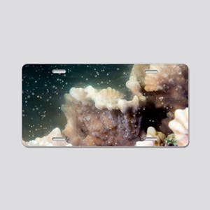 Spawning coral Aluminum License Plate
