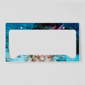 Spanish hogfish License Plate Holder