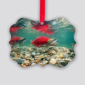 Spawning sockeye salmon Picture Ornament