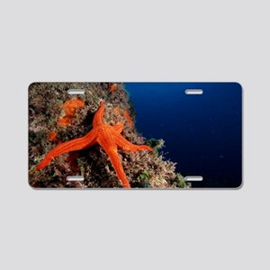 Starfish Aluminum License Plate
