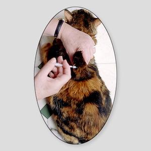 Cat insulin injection Sticker (Oval)