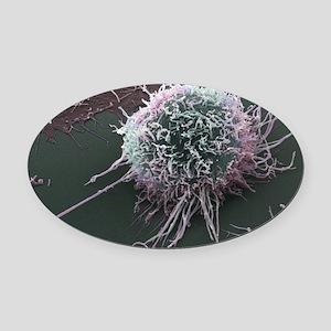 Cervical cancer cell, SEM Oval Car Magnet