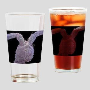 Springtail head, SEM Drinking Glass