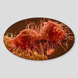 Cervical cancer cell, SEM Sticker (Oval)