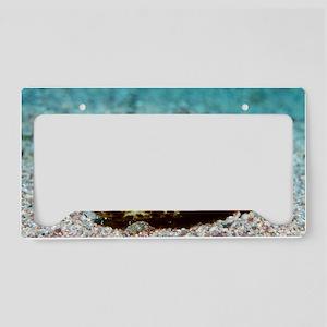 Starry pufferfish License Plate Holder