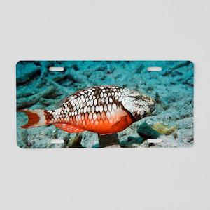 Stoplight parrotfish Aluminum License Plate