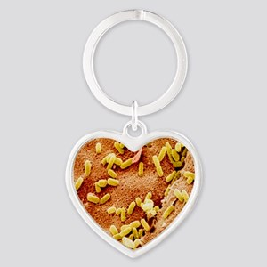 Col. SEM of bacteria on toothbrush  Heart Keychain