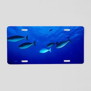 Surgeonfish Aluminum License Plate