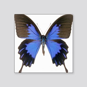 """Swallowtail butterfly Square Sticker 3"""" x 3"""""""