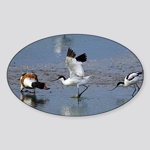Territorial pied avocets Sticker (Oval)
