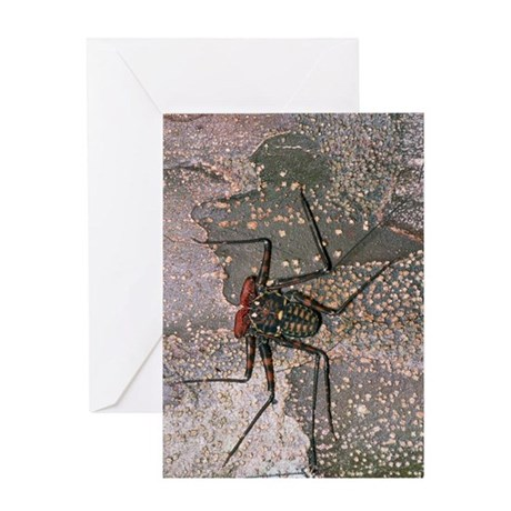 Tailless whip scorpion Greeting Card