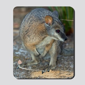 Tammar wallaby Mousepad