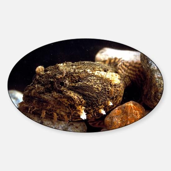Toadfish Sticker (Oval)
