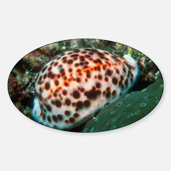 Tiger cowrie sea snail Sticker (Oval)