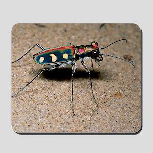 Tiger beetle Mousepad
