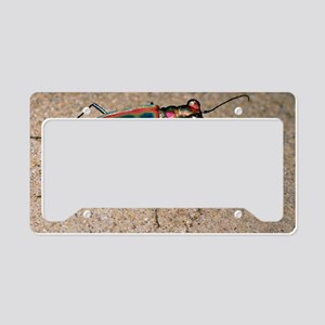 Tiger beetle License Plate Holder