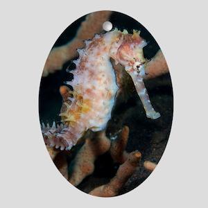 Thorny seahorse Oval Ornament