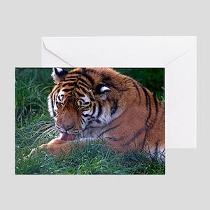 Tiger grooming Greeting Card