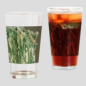 Dental plaque, SEM Drinking Glass