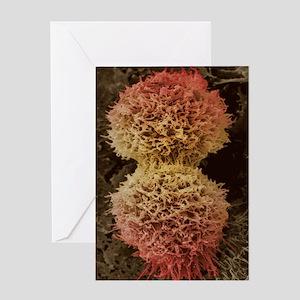 Dividing cervical cancer cell, SEM Greeting Card