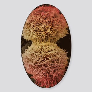 Dividing cervical cancer cell, SEM Sticker (Oval)
