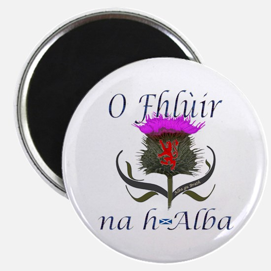 Flower of Scotland Gaelic Thistle Design Magnet