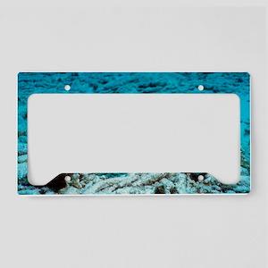 z6051438 License Plate Holder