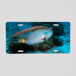 z6051605 Aluminum License Plate