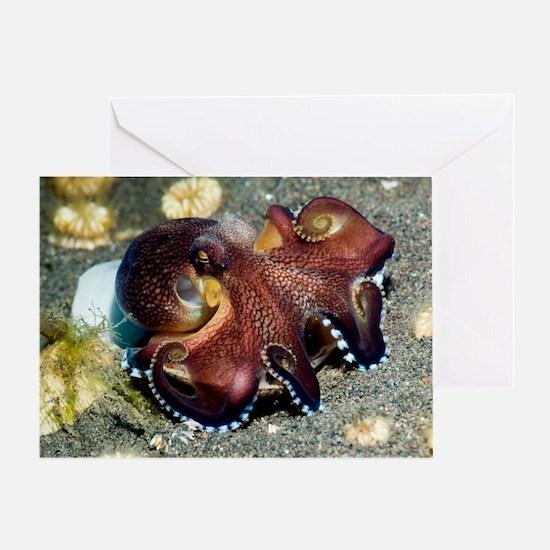 Veined octopus feeding Greeting Card