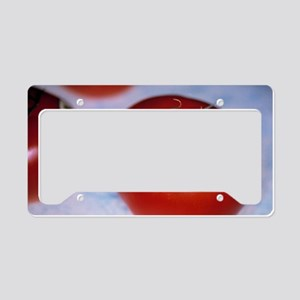 Genetically modified tomatoes License Plate Holder