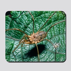 View of a harvestman (order Opiliones) o Mousepad