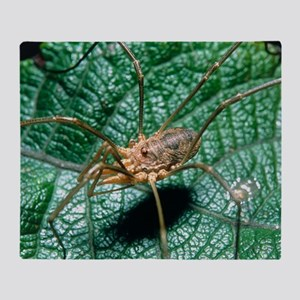 View of a harvestman (order Opilione Throw Blanket