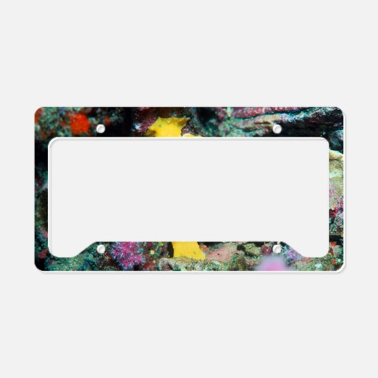Warty frogfish License Plate Holder