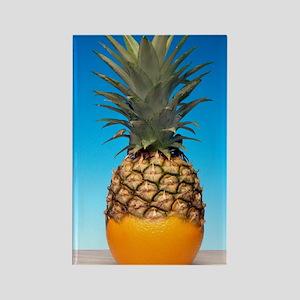 Genetically modified fruit hybrid Rectangle Magnet