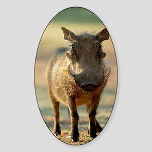 Warthog Sticker (Oval)
