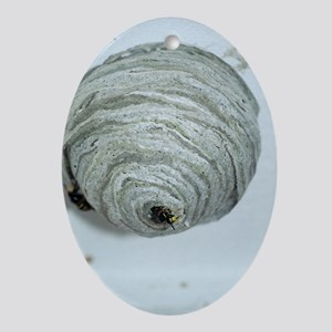 Wasp nest Oval Ornament