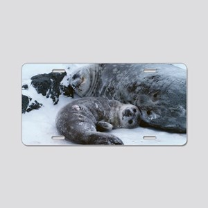 Weddell seal mother with pu Aluminum License Plate
