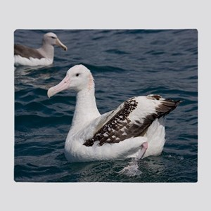 Wandering albatross Throw Blanket