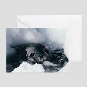 Weddell seal Greeting Card