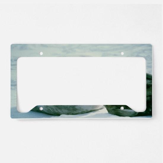 Weddell seals License Plate Holder