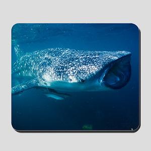 Whale shark and pilot fish Mousepad