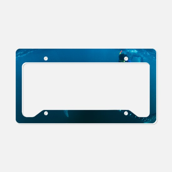 Whale shark and snorkeler License Plate Holder