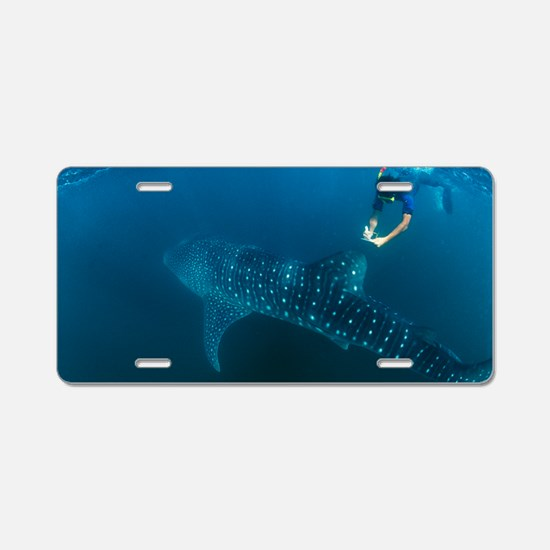 Whale shark and snorkeler Aluminum License Plate