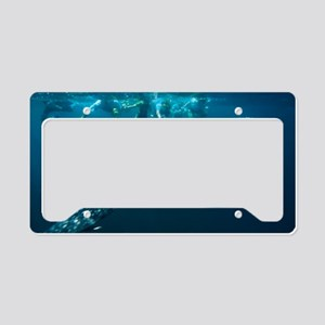 Whale shark License Plate Holder