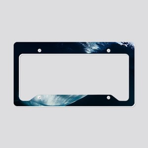 Whale shark feeding License Plate Holder